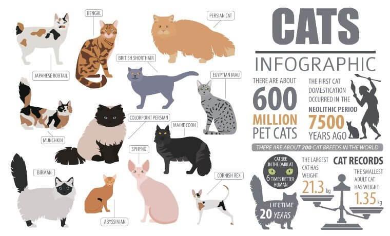 Unternehmenskommunikation - Katzen - Infografik