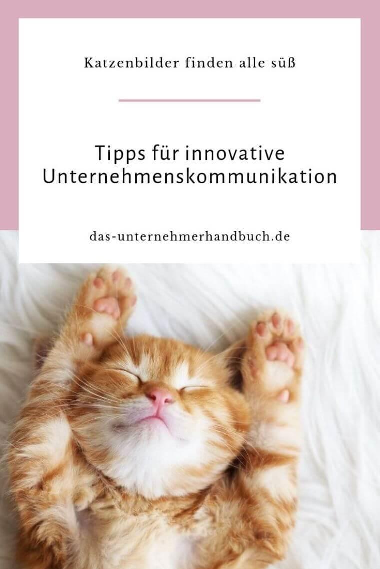 Unternehmenskommunikation - Katzenbild